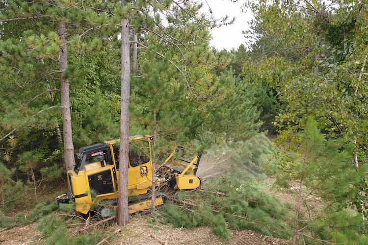 Rayco C120 Forestry Mulcher